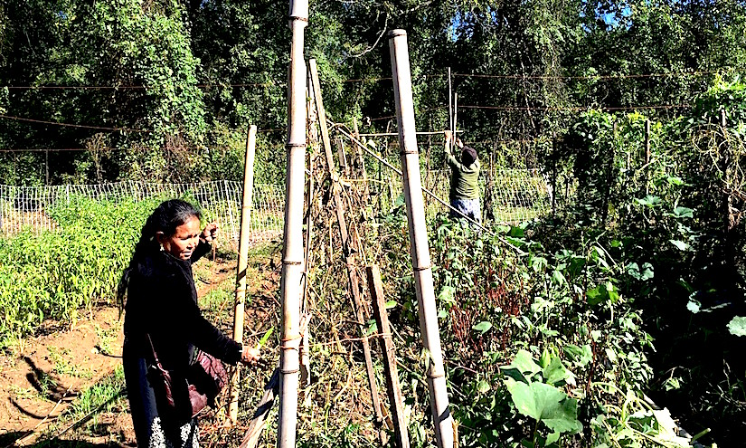 IRC New Roots  newly resettled refugees to grow food in community gardens and on urbanfarms