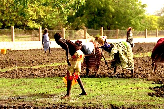 Photo WVC-2004- 112-Girl-bringing-water copy.jpg: Community garden, a TC-Dialogue project in Toubacouta (2004, S. Senegal).