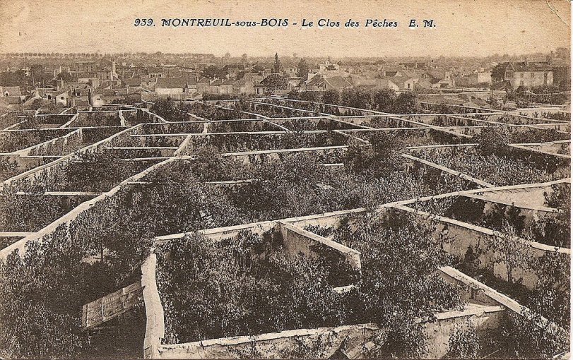 Montreuil peaches