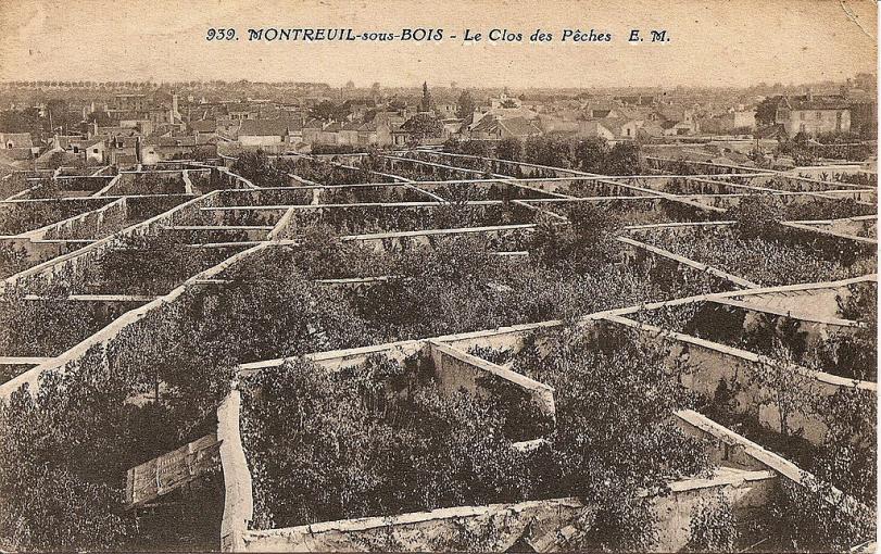 Montreuil peaches