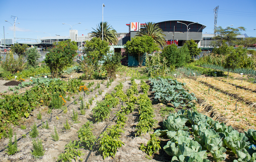 Urban sustainable agriculture
