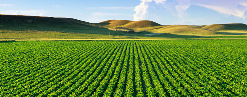 http://www.fieldsync.net/files/2113/6460/9808/banner_agriculture.png