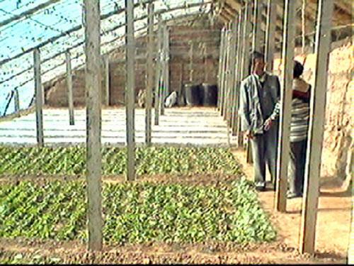 Solar greenhouses to saveenergy