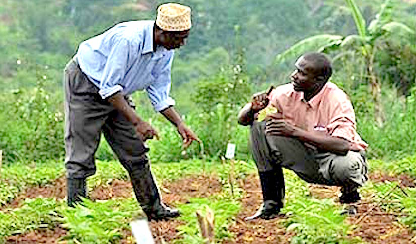 http://www.permaculturenews.org/images/africa_farmer_getting_advice.jpg