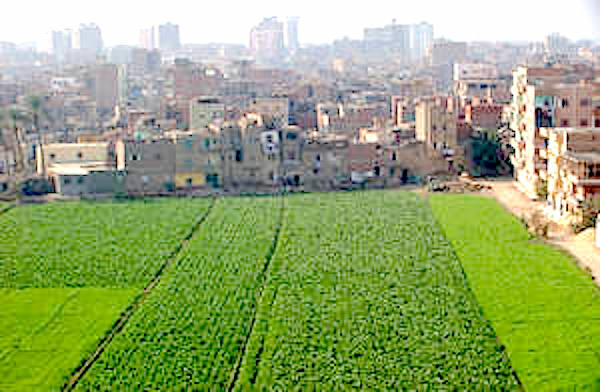 Food security and nutrition, urban planning and development