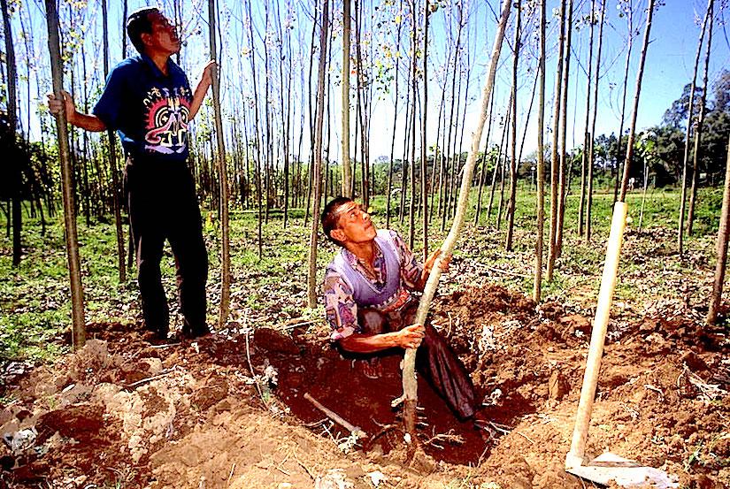 http://static.un.org/News/dh/photos/large/2014/June/06-30-fao-farmers.jpg