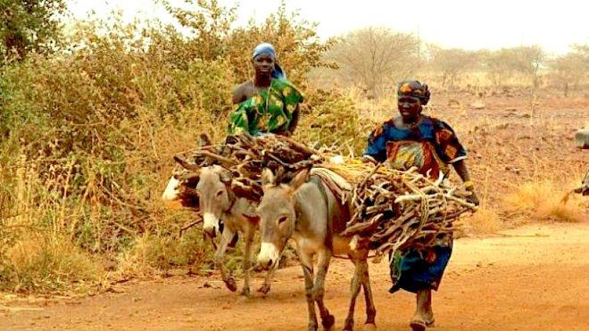 africa_firewood.jpg__800x450_q85_crop_upscale