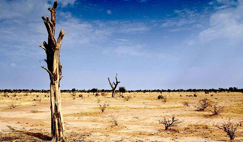 How desertification has turned into a monstrous challenge forAfrica