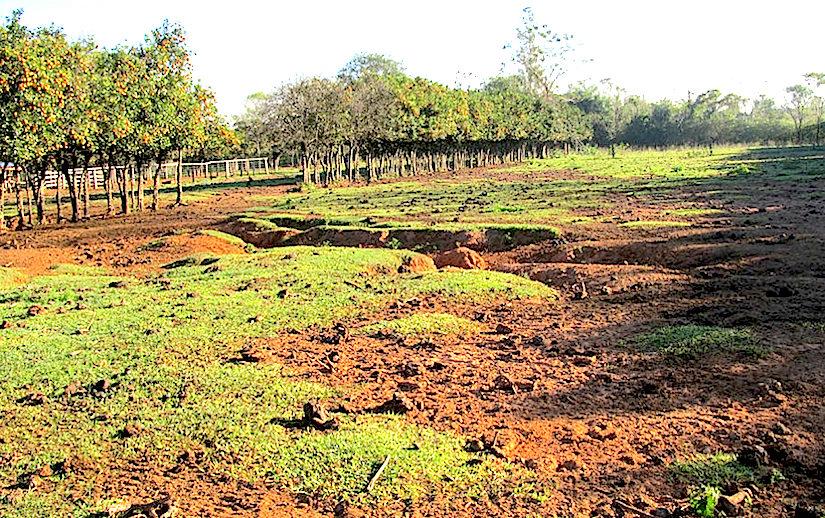 Soil and land restoration(CIAT)