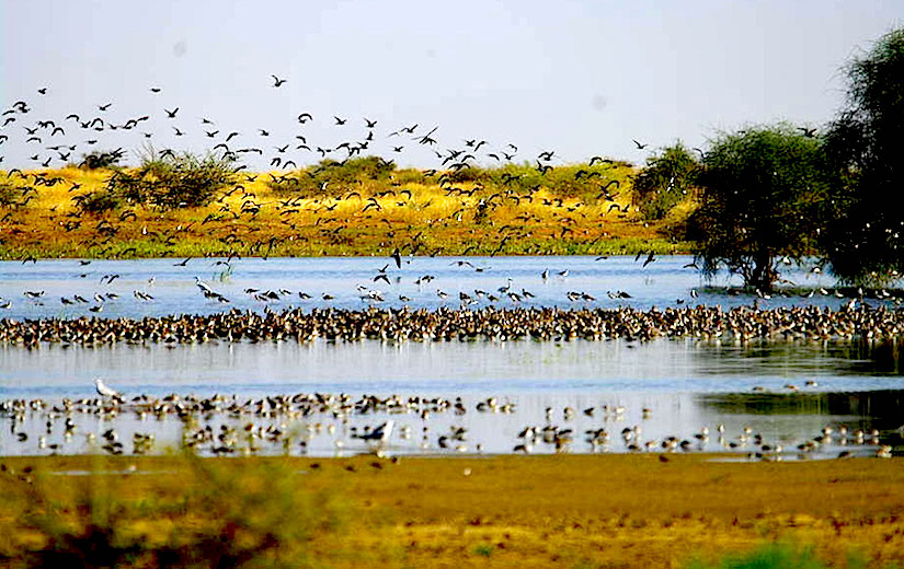 Sustainable water bird management for foodsecurity