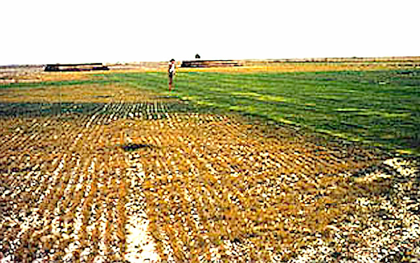 TerraCottem for erosion control of sandy soils all over theworld