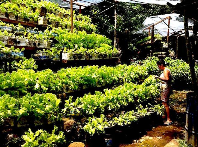 riser-for-massive-food-production-photo-almar-b-autida-10255663_10201730750126773_1525730629288922985_n