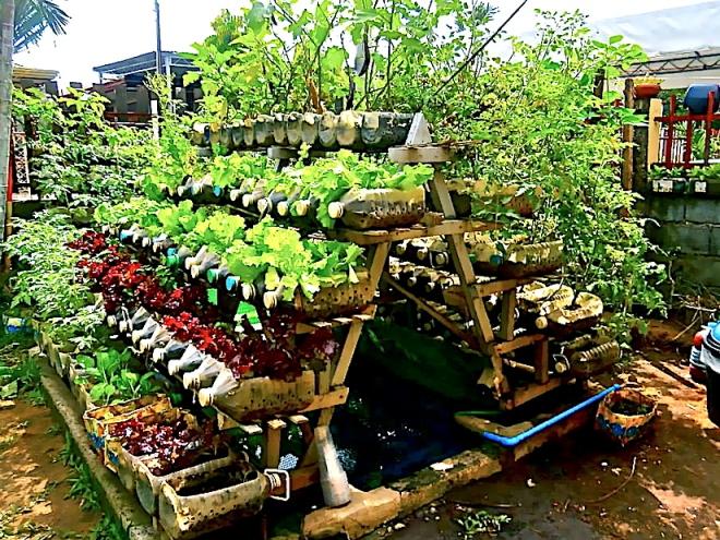 riser-vegetables-photo-jojo-rom-971622_10200263484728066_974390336_n