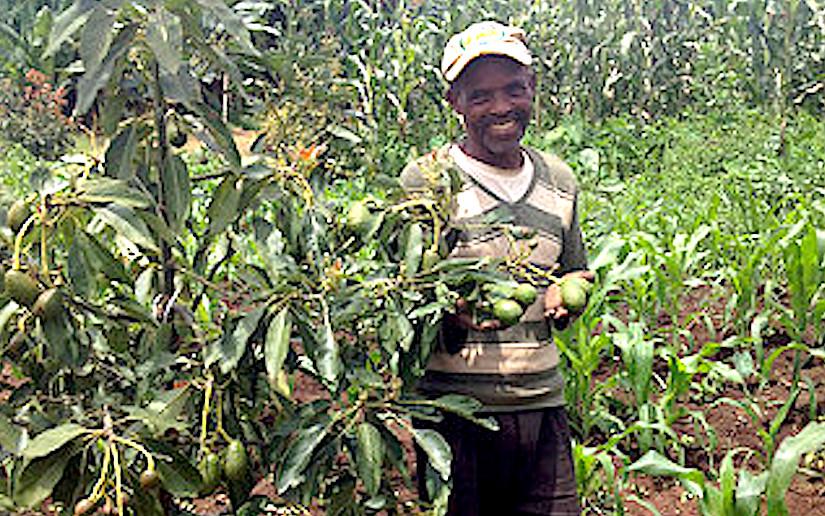 High value trees in Africa RISINGEthiopia
