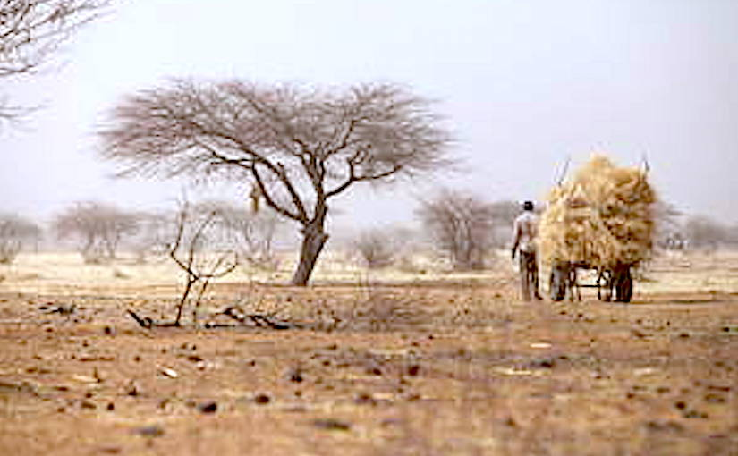 Restoration needs along Africa's drylands have been mapped and quantified