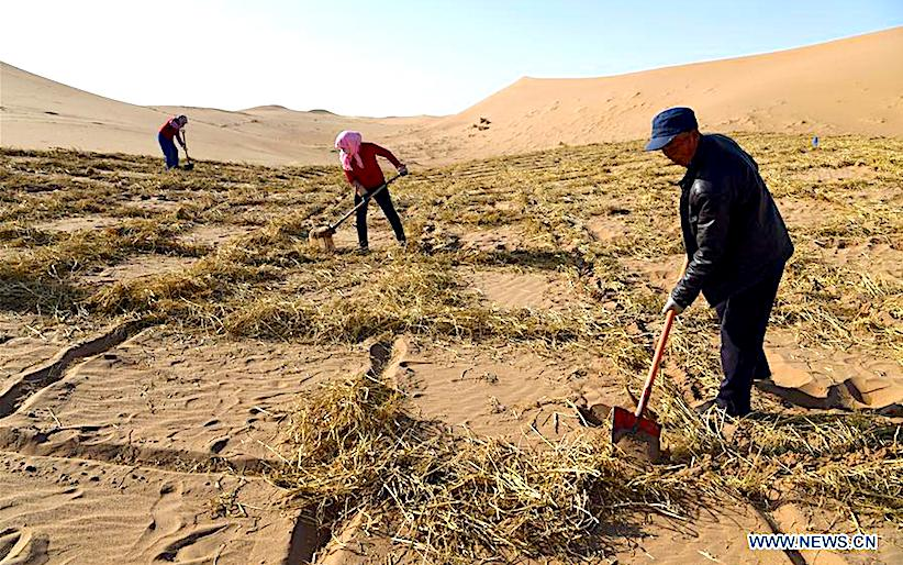 How to prevent desertification in NW China