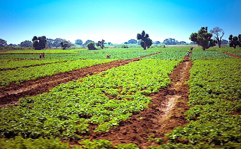 Agriculture in Mozambique. Africa