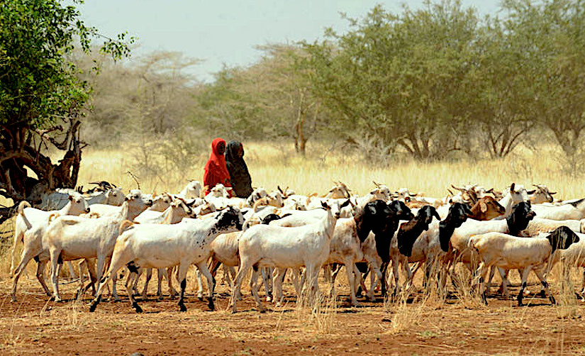 Dire food shortages in Horn ofAfrica