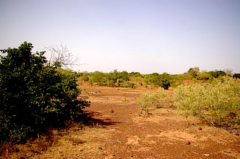 Not only rain but also agriculture and human utilization of trees, bushes and land affect the plants recovering.