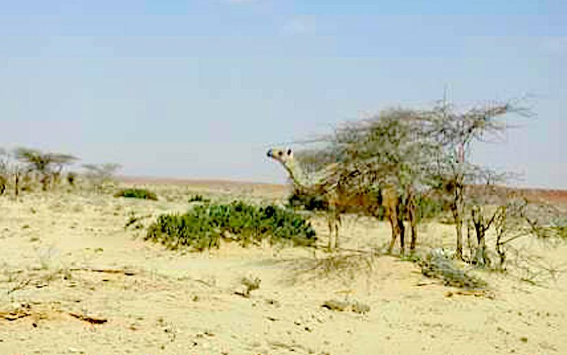 Desertification is a reality inSomalia