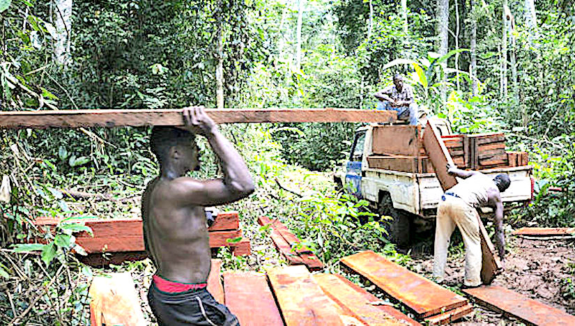 Deforestation and economy