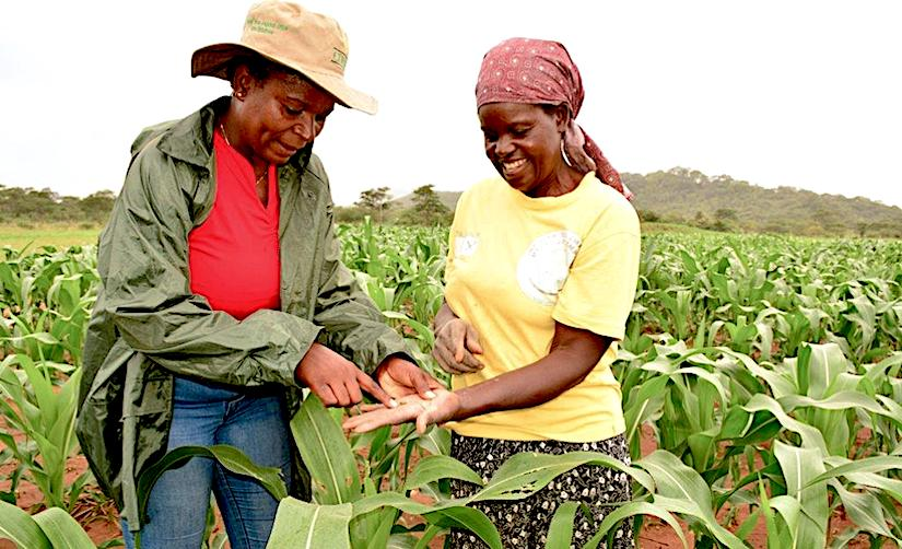 A key component of improving agricultural practices is to bolster seedsystems