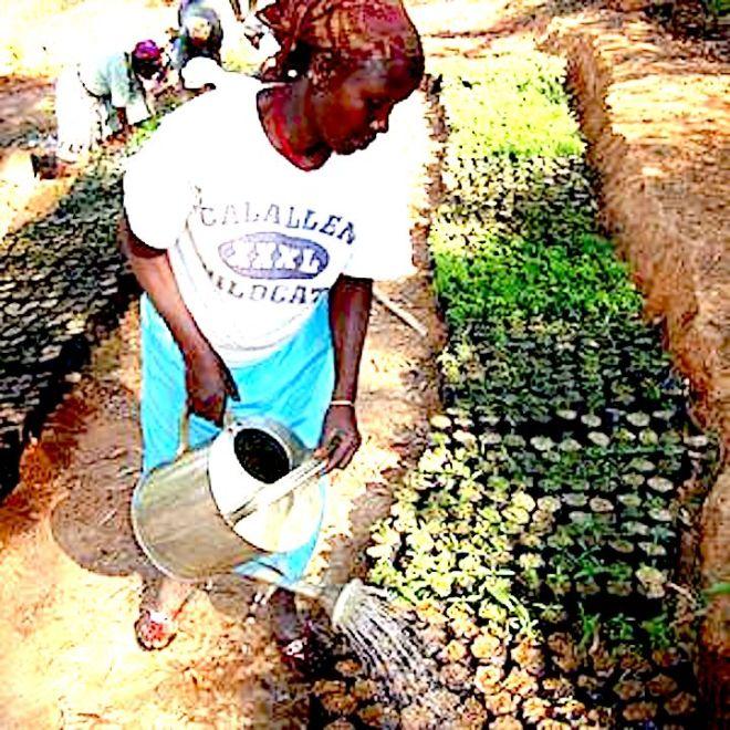 csm_African_Leafy_Veg_seedlings_211a0a88e4