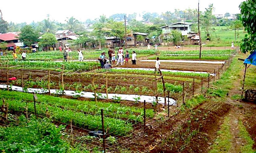 "Did we forget the ""VICTORY GARDENS"" to alleviate malnutrition and hunger ?"