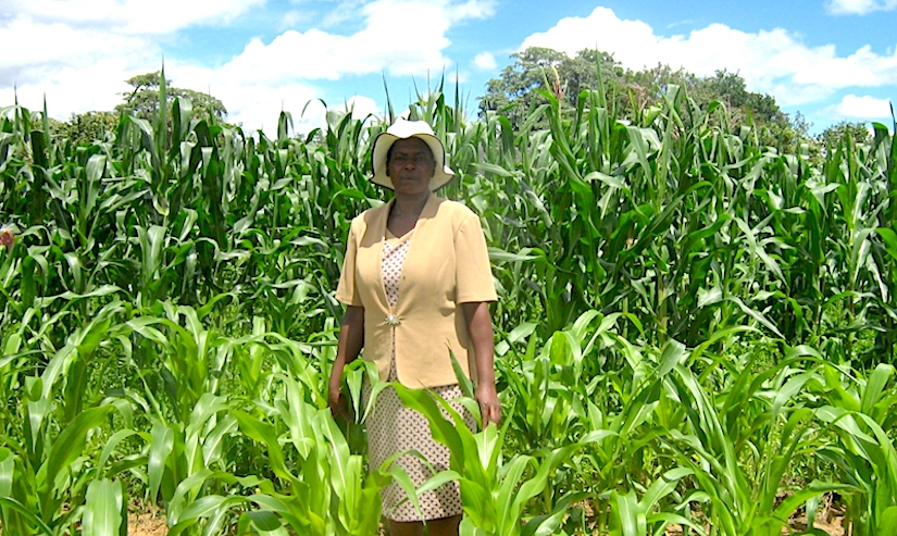 Climate change in Zimbabwe and womenfarmers