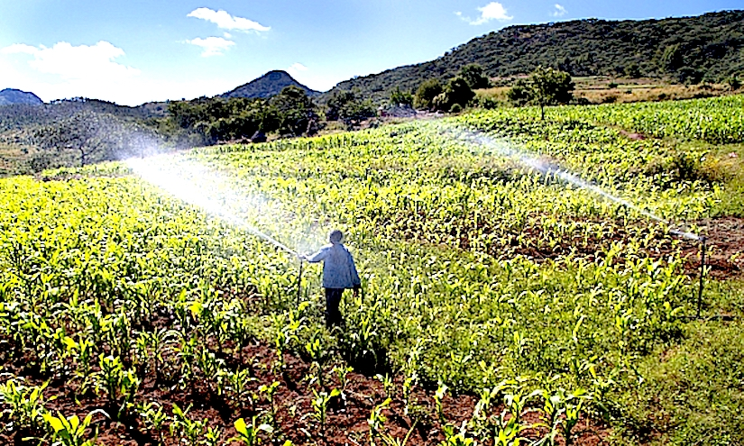Agricultural water productivity for sustainable development