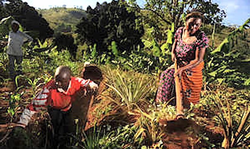 "Insight into successful ""climate smart"" agricultureexperiences"