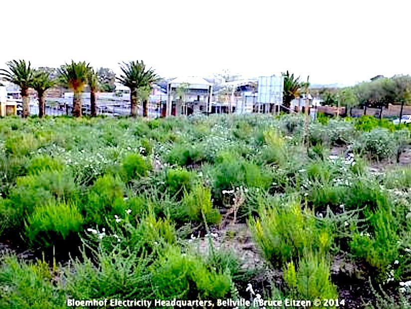 How do you plant a landscape under droughtconditions?