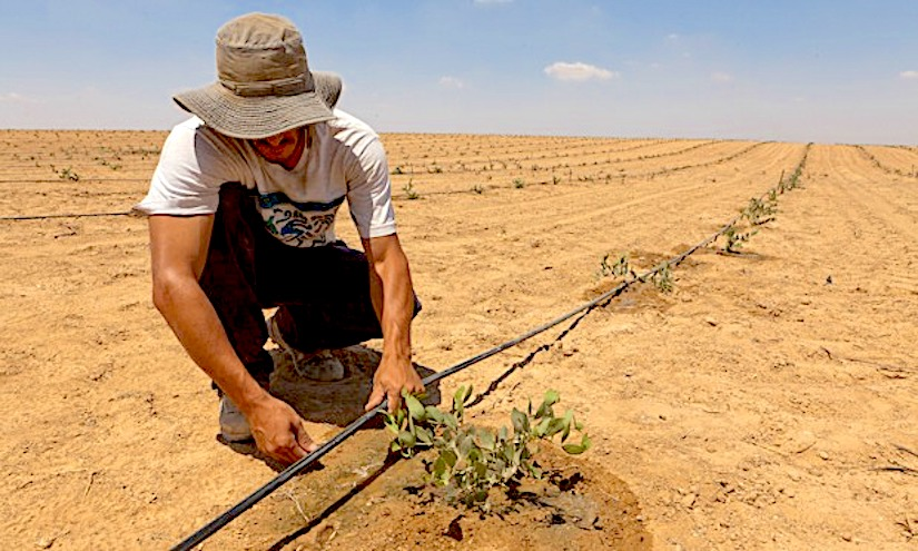Israel's top 10 advances to combat desertification