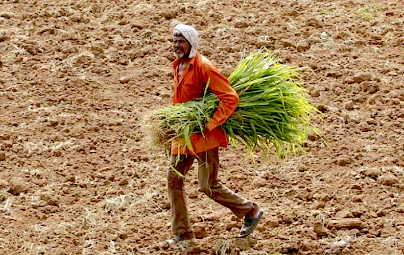 agricultural land degradation deforestation and over cultivation Agriculture is estimated to be the direct driver for around 80% of deforestation worldwide in latin america, commercial agriculture is the main direct driver, responsible for 2/3 of all cut.