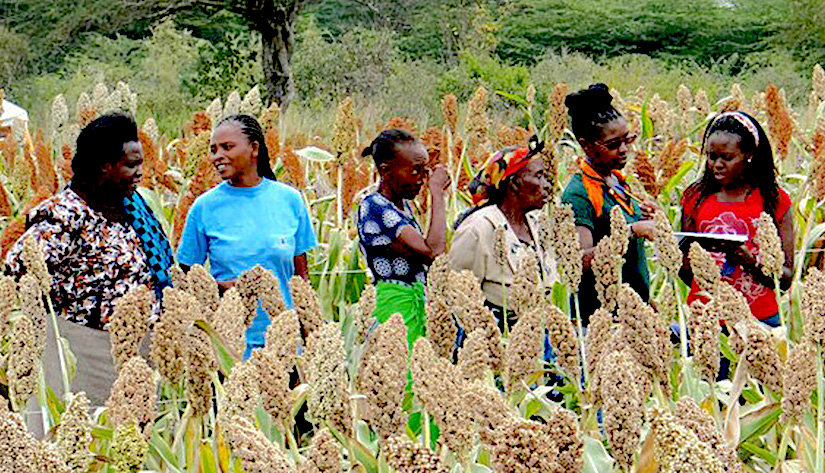 Project: To strengthen sorghum, finger millet and pearl millet value chains in East Africa